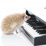 Google Play Musicのファミリープランを検討中